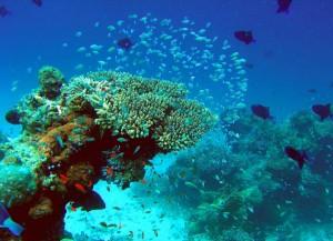 Unter Wasser ist immer was los. – Foto: Velassaru Maldives