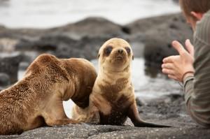 Die Galapagosinseln sind Heimat für eine große Tier- und Pflanzenvielfalt. Foto: © istock.com/tirc83