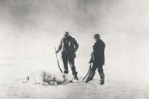 Bei der Eisbärenjagd: Eventuell sind Andrée und seine Männer an Trichinen gestorben, die sie sich beim Verzehr von Eisbärfleisch geholt haben.