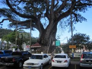Der Derek-Walcott-Square, der große begrünte Platz im Zentrum von Castries ist dem gleichnamigen Literatur-Nobelpreisträger gewidmet, der auf St. Lucia geboren wurde. Neben ihm werden noch andere verdiente Persönlichkeiten der Insel geehrt.