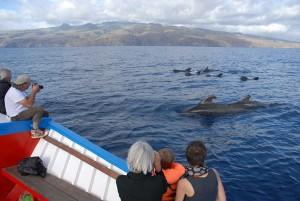 La Gomera ist die Heimat vieler Wal- und Delfinarten. Foto: Oceano Meerzeit Reisen