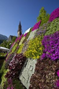 Eine Augenweide ist im Frühjahr der traditionelle Bozner Blumenmarkt. - Foto: Verkehrsamt der Stadt Bozen.