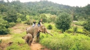 Elefantenritt auf dem Weg zum Fluss.