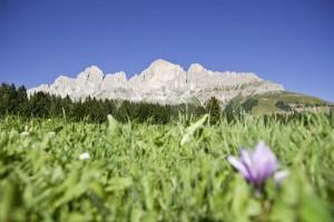 Der neue Trail hat eine traumhafte Aussicht auf den Rosengarten. - Foto: Eggental Tourismus
