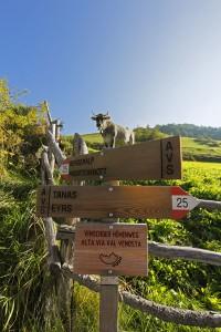 Auf dem Vinschger Höhenweg durchqueren Wanderer einmal den gesamten Vinschgau in Südtirol. - Foto:Vinschgau Marketing/Frieder Blickle