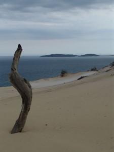 Die Düne von Rainbow Beach. Foto: Kathrin Schierl