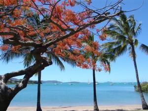 Airlie Beach ist der Ausgangspunkt für einen Trip zu den Whitsunday Inseln. Foto: Kathrin Schierl