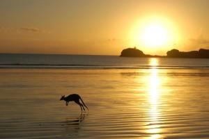 Känguru am Strand. Foto: meine-kartenmanufaktur.de