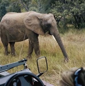 Den Dickhäutern ganz nah kommt der Südafrka-Besucher im Addo Elephant National Park. - Foto: www.dein-suedafrika.de