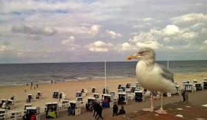 Selbst bei trübem Herbstwetter macht es sich der Sylt-Besucher behaglich in einem Strandkorb oder spaziert am weiten weißen Strand. Währenddessen die Möwe Ausschau hält nach Nahrung, die sie sogar aus den Händen der Besucher stibitzt.