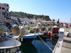 Zahlreiche Boote zieren den Hafen von Piran. Die Lokale im Ort bieten den fangfrischen Fisch zu überaus zivilen Preisen an. – Foto: Dieter