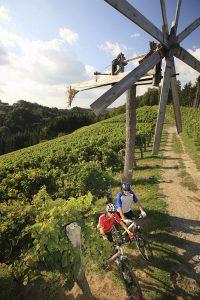 Auf rund 403 Kilometern führt die neue Weinland-Steiermark-Radtour vorbei an Weinbergen, Kürbis- und Apfelgärten, dem Naturpark Pöllauer Tal und dem Naturpark Südsteiermark. - Foto: Steiermark Tourismus / Harry Schiffer