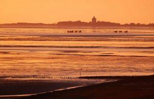 Golden glänzt das Wattenmeer; hinten die Insel Neuwerk. - Foto: Nordseeheilbad Cuxhaven