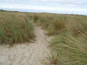 Die riesigen Dünenlandschaften sind wertvolle Lebensräume für Tiere und Pflanzen. - Dieter Warnick