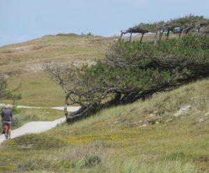 Wenn man nicht an den Strand will, dann bietet sich eine Radtour in den Dünen an. Man ist hier windgeschützter, umso mehr muss man sich vor Sonnenbrand hüten.