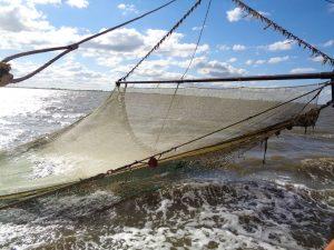 Knapp über der Wasseroberfläche: jeden Moment wird das Netz an Bord geholt. - Foto: Dieter Warnick