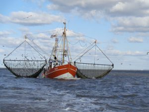 Die riesigen Netze sind breiter als der Krabbenkutter selbst. - Foto: Dieter Warnick