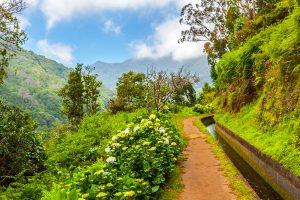 Madeira. Foto: © istock.com/aldorado10