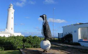 Der Leuchtturm von St. Francis und daneben die Pinguin-Station, die sich um verletzte und kranke Pinguine kümmert.