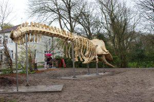 Das Pottwal-Skelett hat seinen endgültigen Platz vor dem Nationalparkhaus Wangerooge gefunden. - Foto: Kurverwaltung der Gemeinde Nordseeheilbad Wangerooge