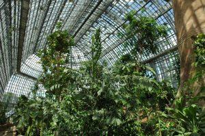 Der Botanische Garten in Berlin zählt aufgrund seiner Fläche und Pflanzenvielfalt zu den größten der Welt. - Foto: I. Haas