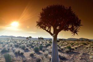 Baobabs bei untergehender Sonne. - Foto: South African Tourism