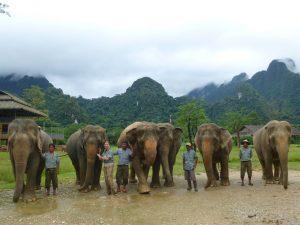 Elephant Hills: Elefanten in ihrem natürlichen Lebensraum. – Foto: Thailändisches Fremdemverkehrsamt