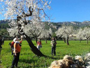 Aktivurlauber genießen den Duft von Millionen Mandelbäumen im Tal von Sóller. - Foto: Wikinger Reisen / N. Bea