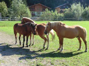 Eine Pferdefamilie lässt es sich gut gehen. - Foto: Dieter Warnick