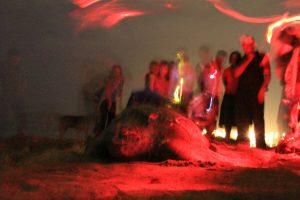 Im Frühjahr kommen sie zur Eiablage an viele Strände Tobagos. Tierschützer achten darauf, dass die Schildkröten nicht gestört werden.