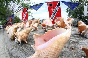 Die Fechterschnecke, Conch, ist eine Art Nationalspeise auf Tobago. Schade, denn ihr Bestand ist gefährdet.