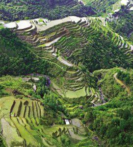 Die Reisterrassen von Banaue gelten sie als Achtes Weltwunder und UNESCO-Weltkulturerbe. - Foto: Philippine Department of Tourism