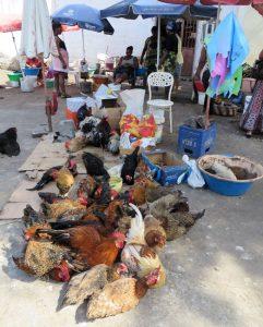Markt in Praya. Hähne und Hühner warten auf zahlungswillige Käuferinnen, von denen es angeblich genug gibt in der ehemaligen portugiesischen Kolonie. Laut Statistik zählt Cabo Verde zu den wohlhabendsten Ländern Afrikas.