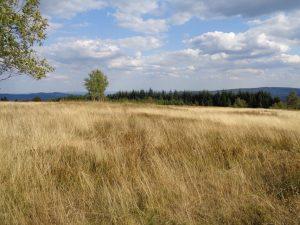 Eine typische Heidelandschaft, wie sie oft im Sauerland vorgefunden wird. – Foto: Dieter Warnick
