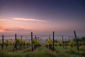 Mallorca hat eine lange Geschichte des Weinanbaus. Foto: Karsten Wurth | unsplash