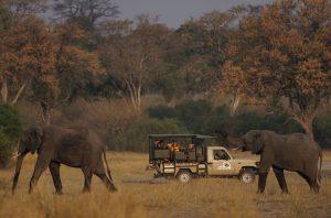 Eine aufregende Begegnung: Teilnehmer einer Safaritour und zwei Elefanten im Buffalo Nationalpark.