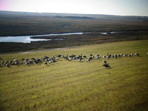 Salzwiesen bieten eine große Nahrungsvielfalt. – Foto: Dieter Warnick