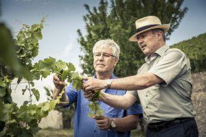Waren mit dem Ertrag der Lese 2018 hochzufrieden: die beiden Weingutdirektoren Robert Haller (links/Bürgerspital) und Horst Kolesch/Juliusspital).– Foto: www.bayern.by / Bernhard Huber