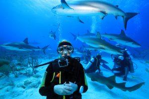 """""""Fischsuppe"""" beim Tauchgang mit Stuart Cove in Nassau."""