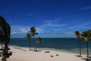 Der Strand in Grand Bahama - hier sind Tigerhaie unterwegs, die zweitgefährlichsten Haie nach dem weißen Hai.