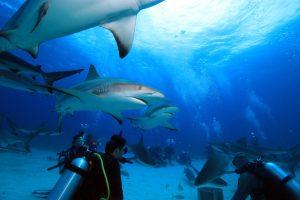 Ganz schön was los unter Wasser.