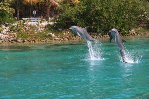 Dolphin Encounter Nassau: Hier kann man Tieren wie Delfinen, Stachelrochen oder Seehunden hautnah begegnen.