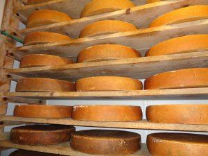 140 Tonnen Käse werden in der Sennerei Gunzesried hergestellt und verkauft. In diesem Regal lagert der berühmte Allgäuer Emmentaler. - Foto: Dieter Warnick