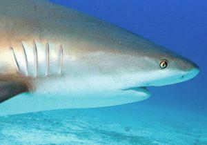 Haie sind nicht die Fressmonster, als die sie im Film Jaws dargestellt werden!