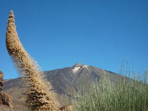 El Teide. Foto: Ursula Angelika Küffner