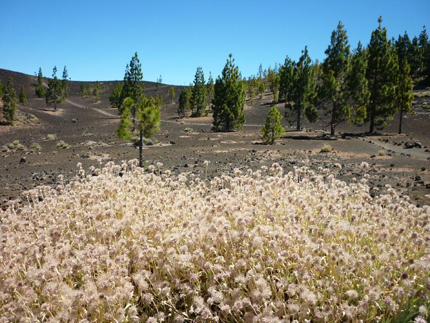 Teide Nationalpark. Foto: Ursula Angelika Küffner