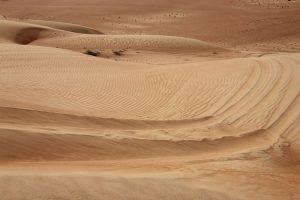 Die Wüste lebt... - Foto: Michael Stephan