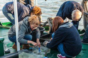 """An Bord der """"Harle Kurier"""" werden Meeresbewohner vorgezeigt, die beim Schweinswal auf der Speisekarte stehen. - Foto: Wattenmeer Besucherzentrum Wilhelmshaven"""