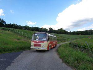 """Nicht alltäglich – ein Oldtimer-Bus aus dem Jahr 1962 in der Külsheimer Weinberglage """"Hoher Herrgott"""". – Foto: Dieter Warnick"""