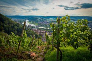 Weinberge in Klingenberg. – Foto: Churfranken e.V. / Dominik Stapf